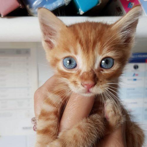 gattino_occhiblu(2)
